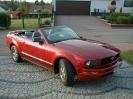 My Mustangs